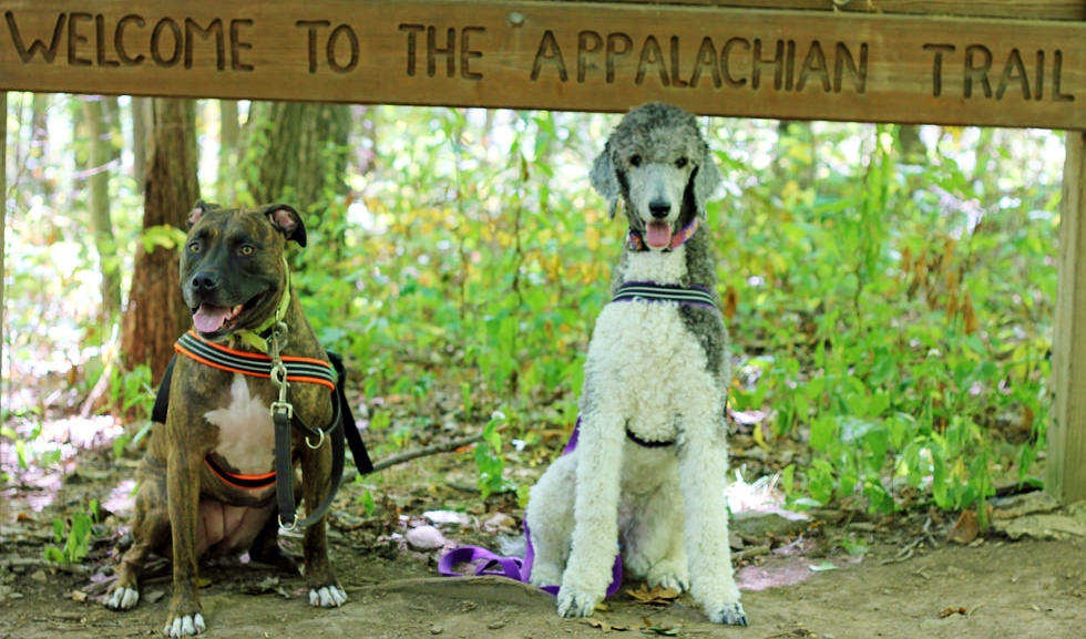 Dogs on the Appalachian Trail